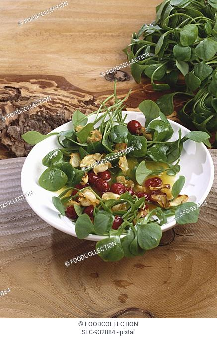 Winter salad: miner's lettuce with parsnip crisps & cranberries