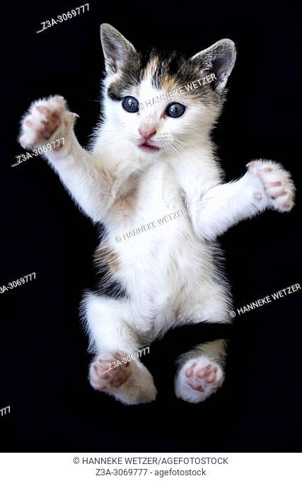 Cute baby kitten, caught in surprise