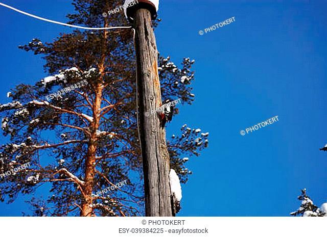 Funny woodpecker on a tree