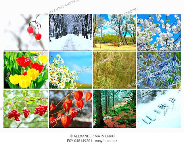 Different twelve colored images of nature for calendar. Ready photo for calendar. Pictures for yearly calendar. Placard for office