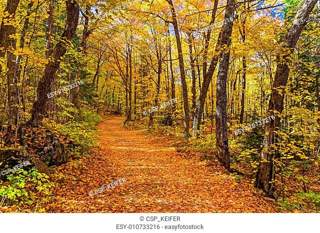 Fall in the Michigan Woods