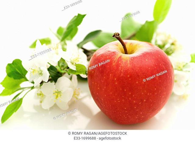Organic apple with apple blossoms