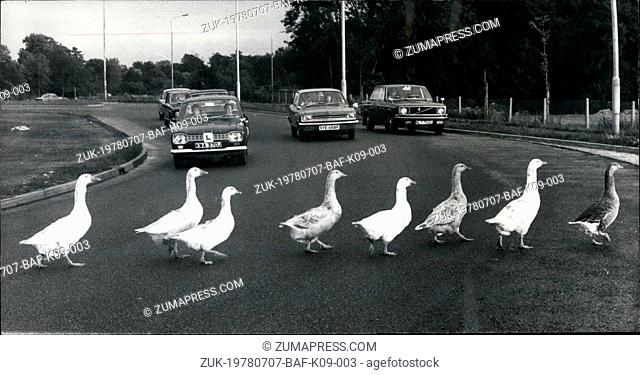 Jul. 07, 1978 - Why did the geese cross the road?: Motorists are used to all sorts on the roads but who would expect to see a flock of geese crossing a busy...
