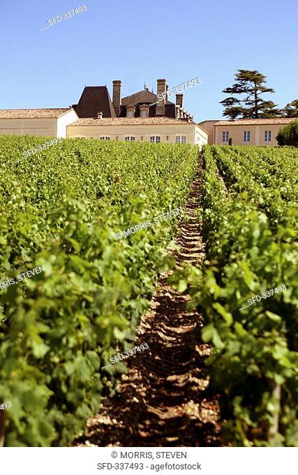 Château Grand Puy Lacoste, Pauillac, Médoc, France