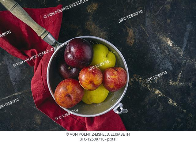 Colourful plums in a vintage sieve