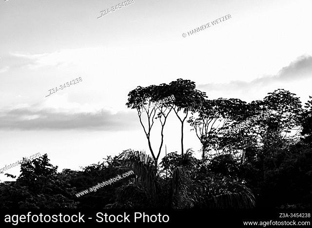 Landscape of Topes de Collantes, Trinidad, Republic of Cuba, Caribbean, Central America