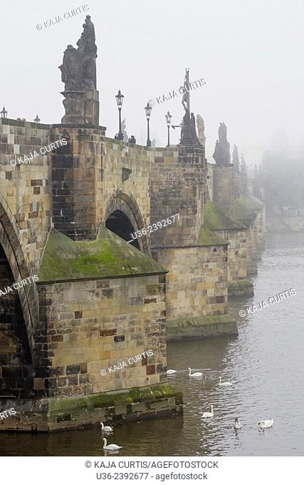 Charles Bridge and Swans