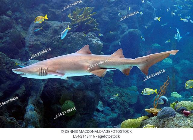 Shark Tank The Florida Aquarium Tampa FL US