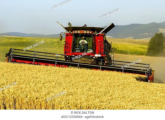 A Combine Harvests Grain In The Palouse Region Of Washington; Washington, United States Of America