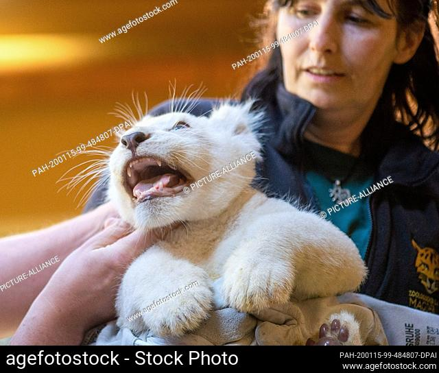 15 January 2020, Saxony-Anhalt, Magdeburg: Veterinarian Mensing (l) and animal keeper Susann Paelecke examine a small white male lion