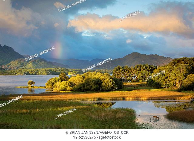 Dawn view over Lough Lean, Killarney National Park, County Kerry, Republic of Ireland