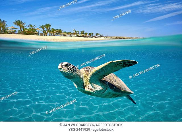 Marsa Alam - underwater view at Sea Turtle, Red Sea, Egypt