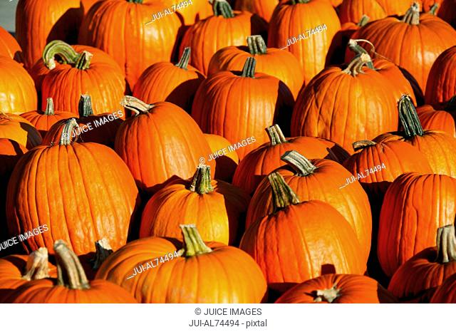 Detail view of pumpkins in autumn