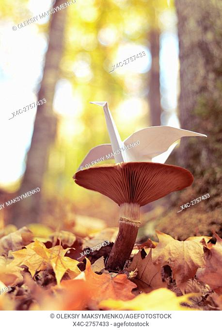 Origami paper crane sitting on a mushroom outside in autumn nature settings