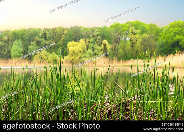 River in the forest at cloudy spring evening