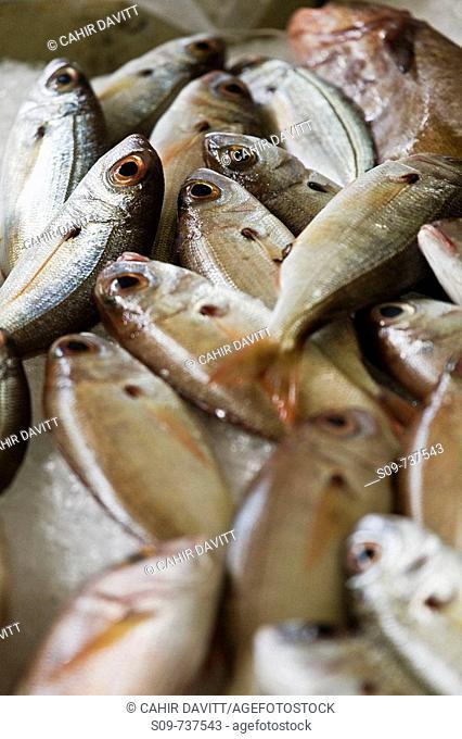 Fish display in the fish market in Santa Luzia, Funchal, Ilha da Madeira, Portugal