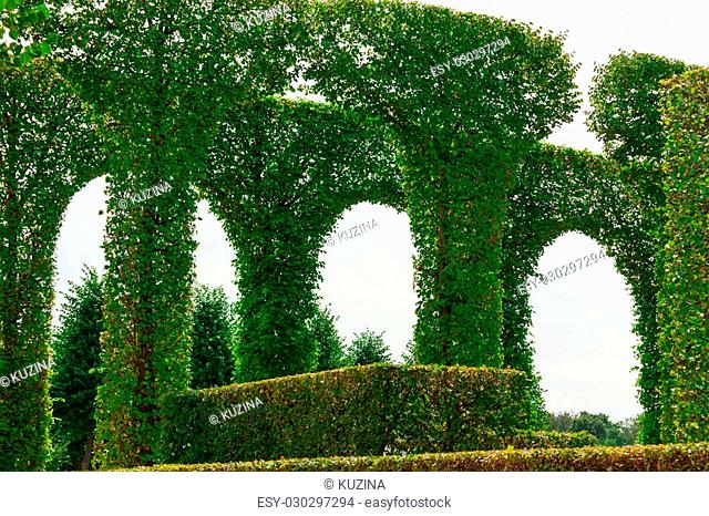 Beautiful garden with green hedges with trees
