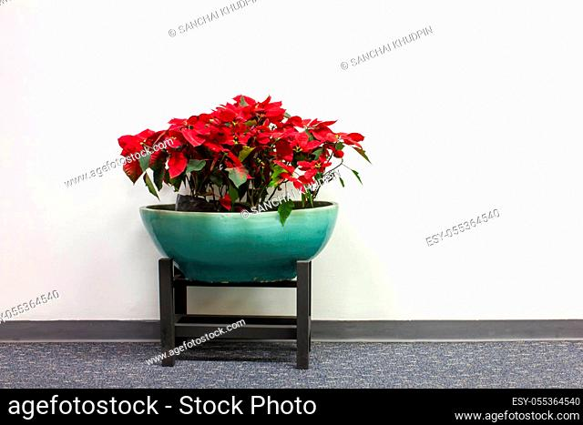 plant decoration in office building