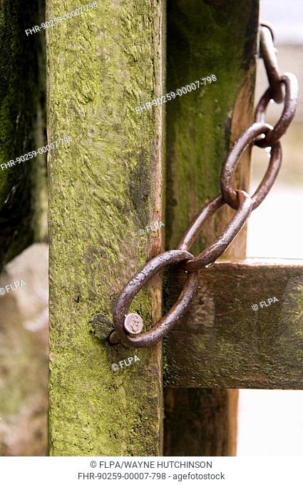 Close-up of chain fastener on wooden gate, Wasdale, Lake District, Cumbria, England