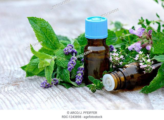 Herbs and herb oil