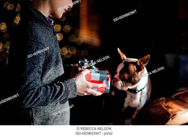 Boy giving Boston Terrier pet dog Christmas gift