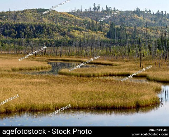 Algoma region, autumn, Kanada, landscape, swamp, meandering stream, Ontario