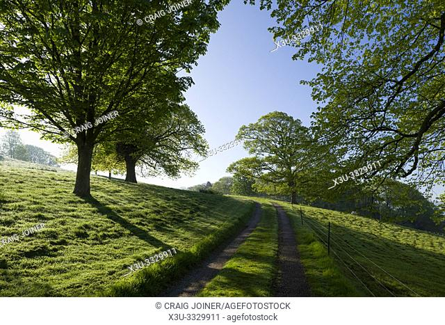 Morning spring sunlight in the countryside at Old Hill near Wrington, North Somerset, England