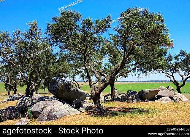 Megalith und Steineichen - Megalith and Holly Oak 01