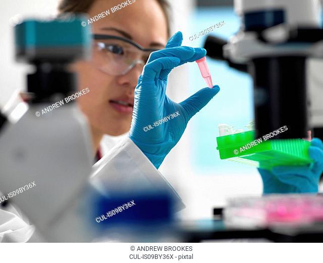 Scientist preparing sample for genetic testing in laboratory