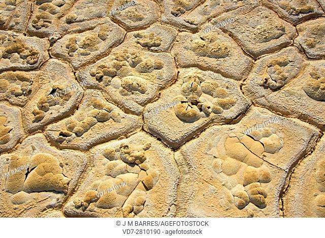 Mudcracks or drying cracks are muddy sedimets dries and contracts. This photo was taken in Mazarron mine, Murcia, Spain