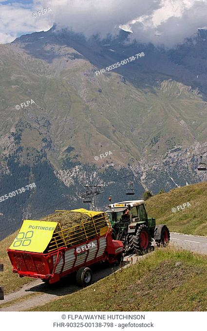 Tractor pulling forage wagon with grass crop at harvest, on mountain road, Alps, France, summer