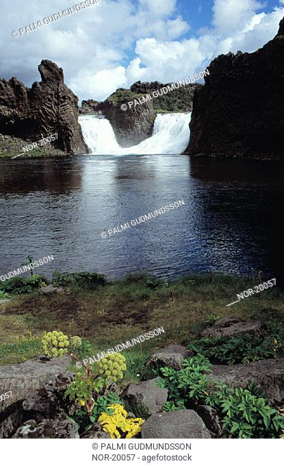 Waterfall and cliffs, some angelicas in foreground