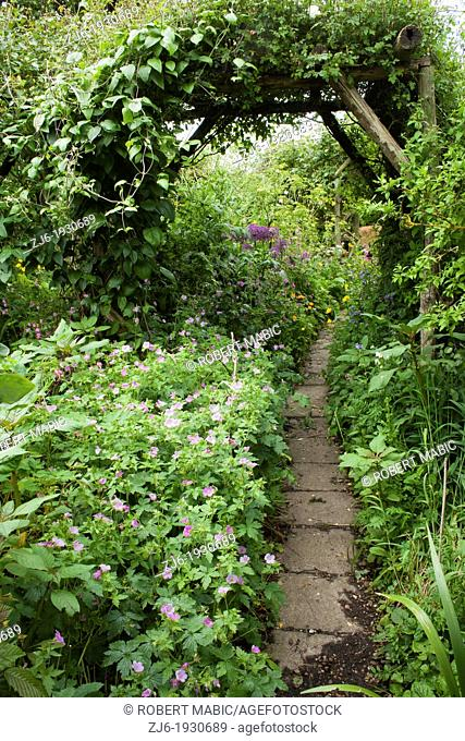 Pathway through herbaceous summer borders in cottage garden, Kent England