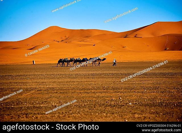 caravan of camels across the desert