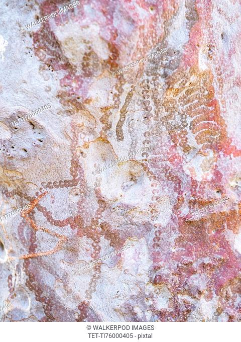 Australia, New South Wales, Abstract patterns on rock in Blue Mountains