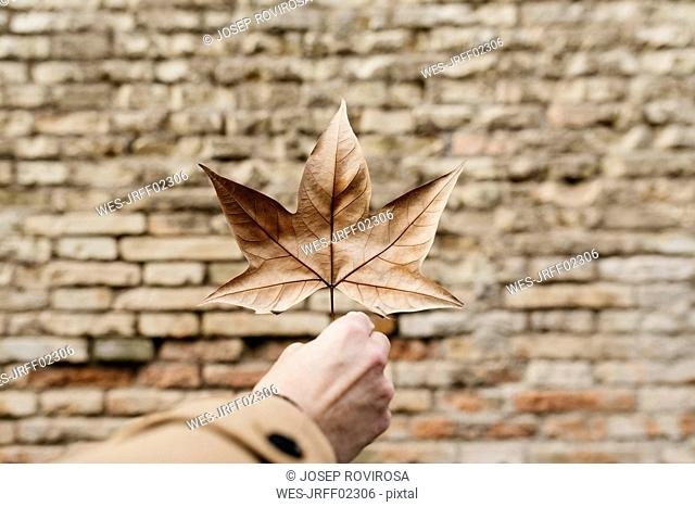 Close-up of man's hand holding autumn leaf with brick wall in background