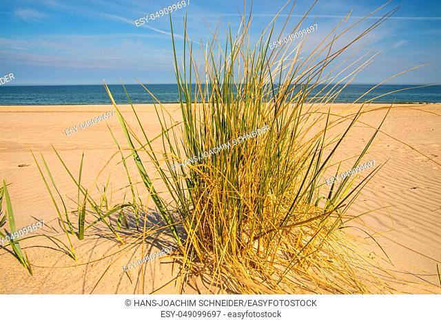beach grass on a beach of the Baltic sea