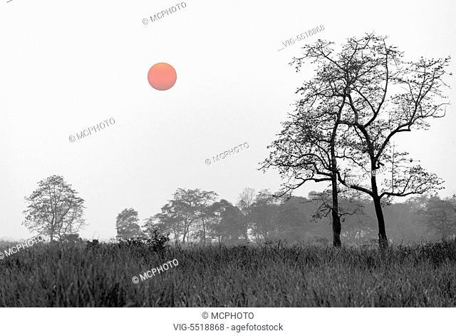 Sunset in Kaziranga NP, Assam, India. - 03/08/2007