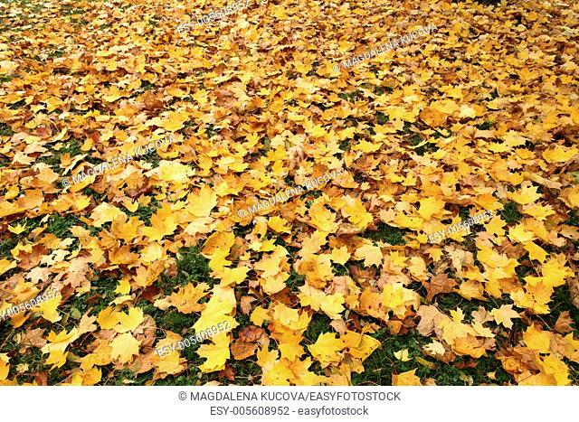 Close-up of colorful autumn leaves in park