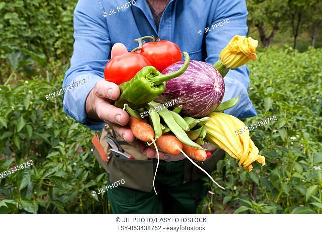 Farmer showing freshly picked vegetables. . Navarra. Basque Country. Spain