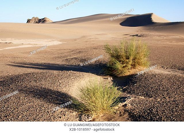 In October 2009, China's Inner Mongolia Autonomous Region EJINAQI, Desert grass