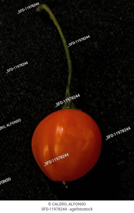 A Uvilla Grande chilli pepper