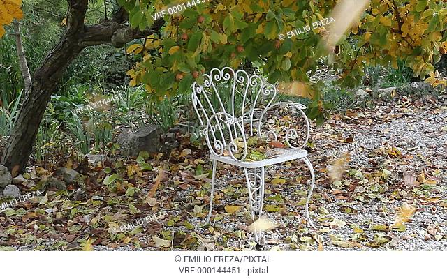 Chair in Autumn