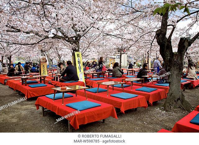 tourists in outdoor restaurant, bar during cherry blossom season. Maruyama-koen park, Kyoto, Japan