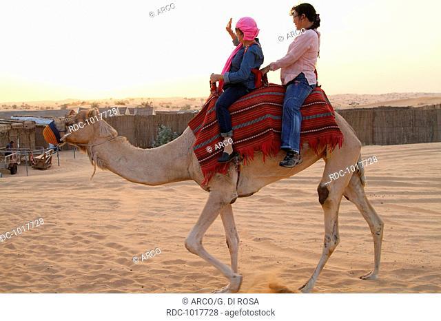 Camel ride in the dessert, Dubai, United Arab Emirates