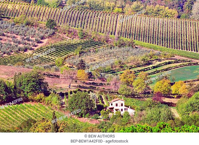 Vineyards in Montepulciano, Tuscany, Italy