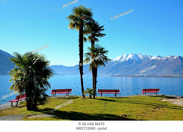 Palm trees and an, lake