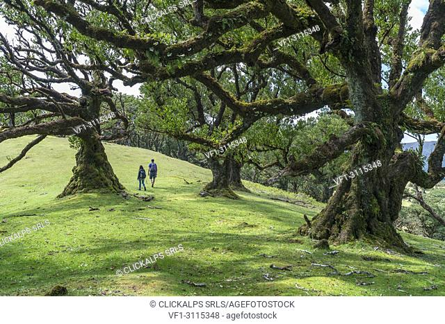 Couple walking under Laurel trees in the Laurisilva Forest, UNESCO World Heritage Site. Fanal, Porto Moniz municipality, Madeira region, Portugal