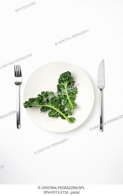 Green leaves on a white plate