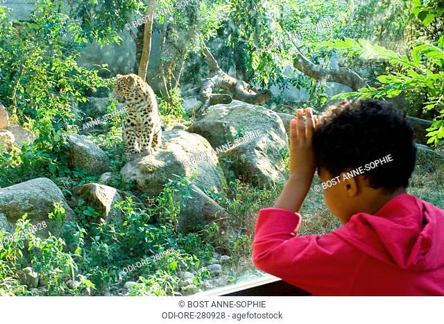 Petit garon cheetah zoo